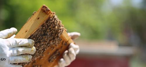 Bzz Klub - Podpora včiel